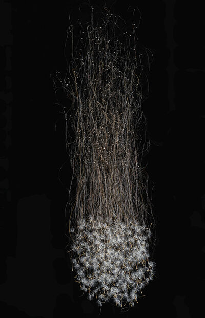 Julia Randall, 'Suspended', 2016