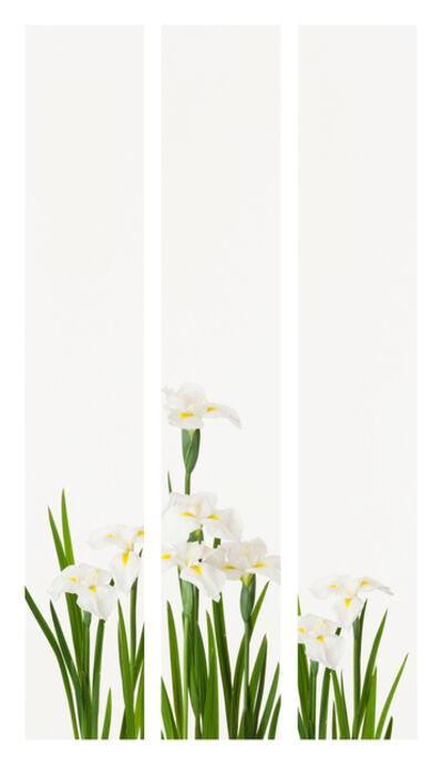 Takashi Tomo-oka, 'Shirashobu 1 ( White iris)', 2015