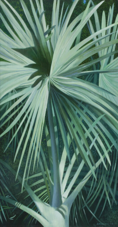 Joseph Barbieri, 'Bismarckia Nobilis, Antigua', 2015