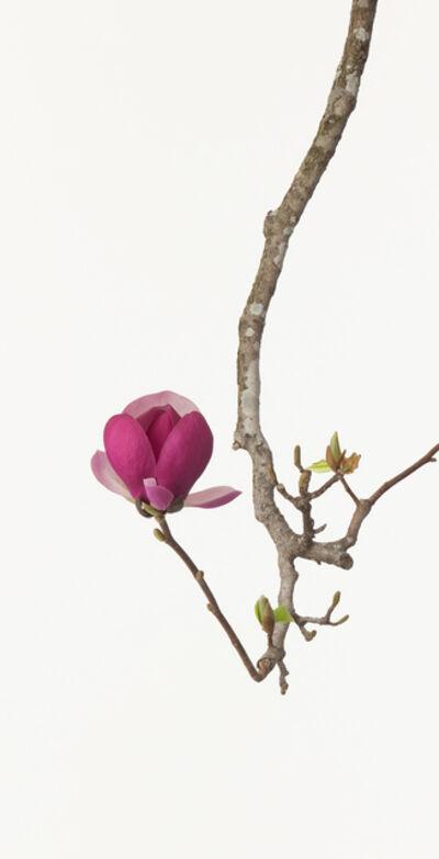 Takashi Tomo-oka, 'Magnolia 2', 2011