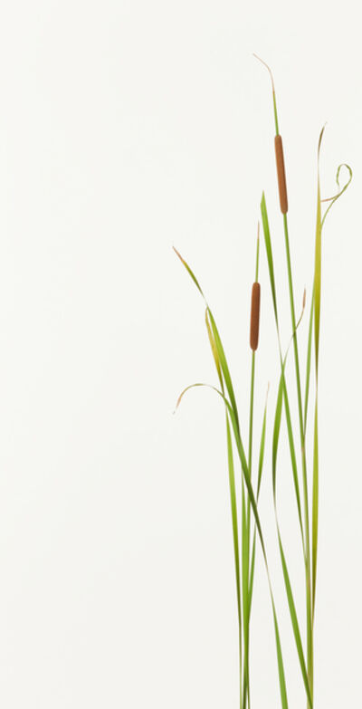 Takashi Tomo-oka, 'Hime gama ( Small reedmace )', 2012