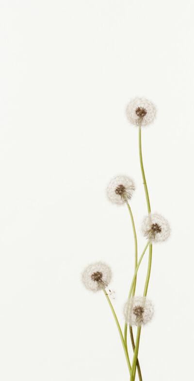 Takashi Tomo-oka, 'Dandelion 2', 2011