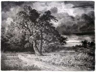 Oak after Storm