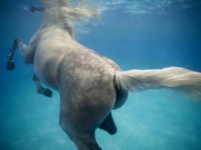 Underwater 4, Doha