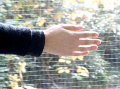 Hand Wall