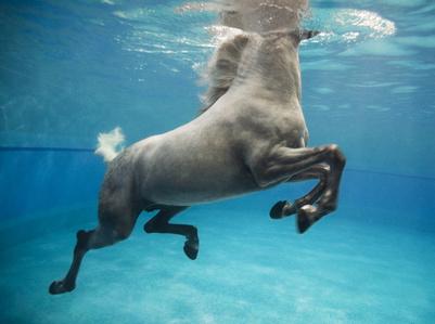 Underwater 9, Doha