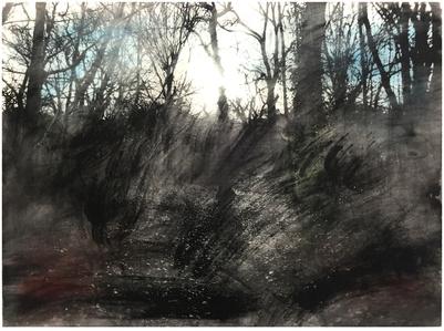 Queens Wood 1.4