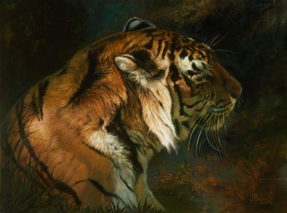 Tiger Shadows