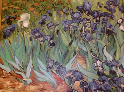 flower-de-luce (Irises) of 2008 (Yuan Wei Hua)