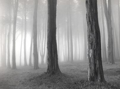 Trees and Fog, San Francisco
