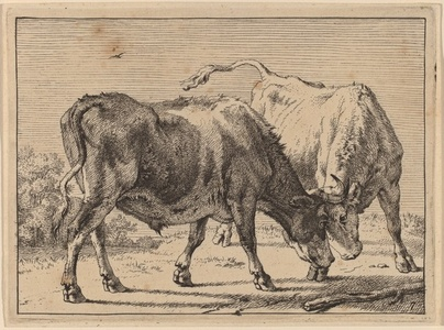 Two Oxen Fighting