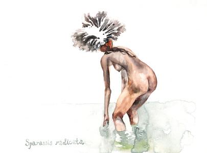 Sparassis Radicata