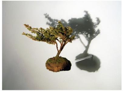Árvore cisco