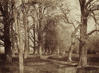 Trees (Pepperharrow Park)