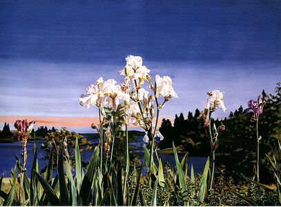 White Irises/Evening