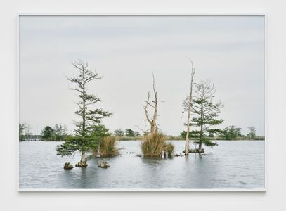 April 17, Swamp, Venice, Louisiana, from The Silent General