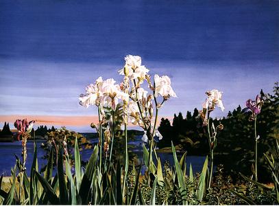 White Irises/Evening