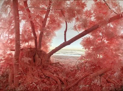 Pink Forest Installation