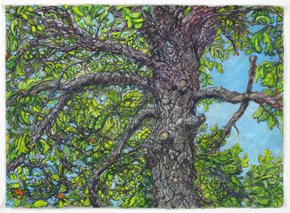 Oak Tree/Parking Lot