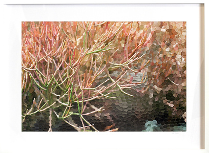 Reef (framed)