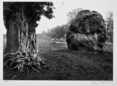 Stone & tree, Averbury, England 1967