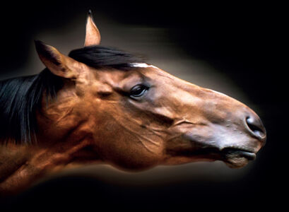 Frankel The Great