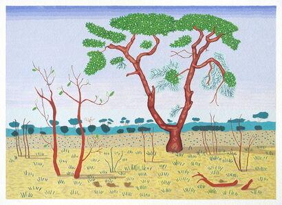 African Tree - Zimbabwe