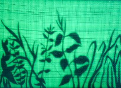 From the series La poética de las sombras