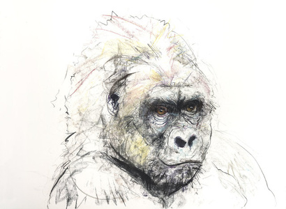 Gorilla V