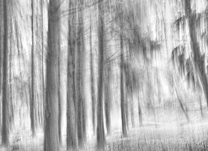 Forest Abstract I