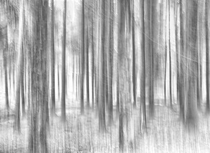 Forest Abstract II