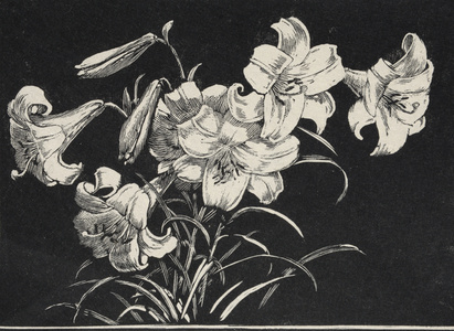 Lilies L Brown I, c1919