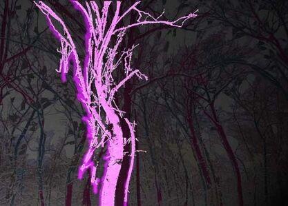 Trees #5 - Night