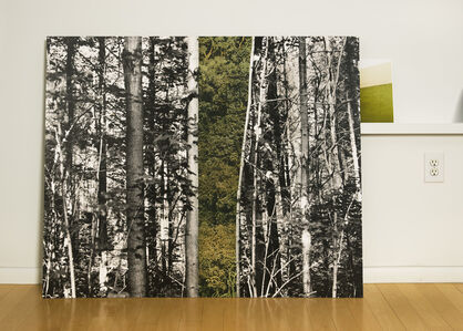 Forest in the Studio