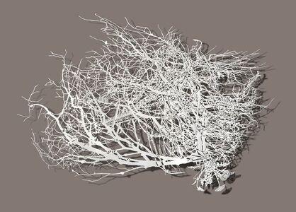 Roots - Dandelions