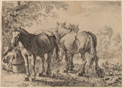 Three Horses in a Field