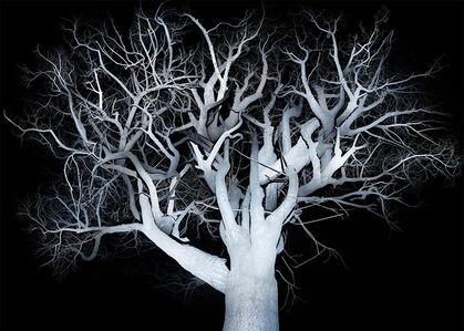 The Tree-2