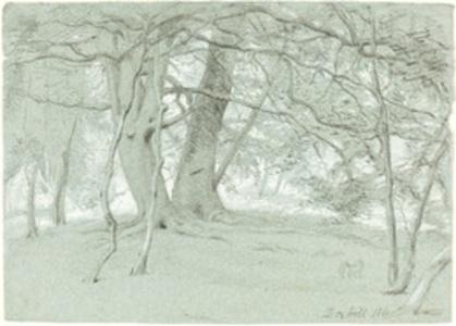 Trees at Box Hill