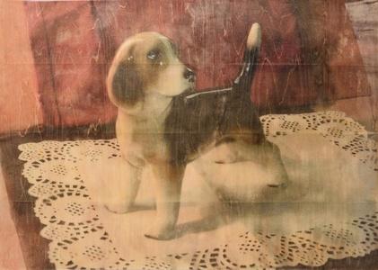 Beagleing