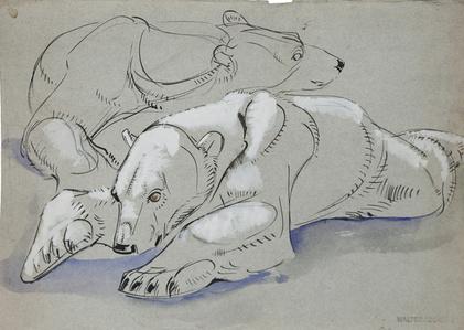 Bears: Polar Bear Study