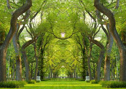 Trees, NY