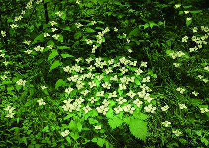 Lux-Flower 1