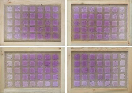 Beecolour Series I-P+60E18N