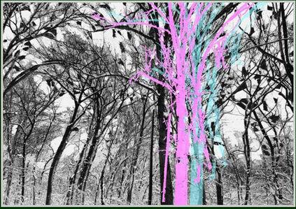 Trees #2 - Winter