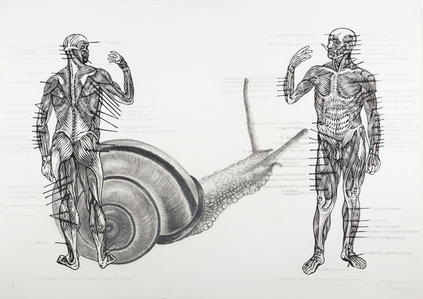 Muscelos del cuerpo [The muscles of the body]