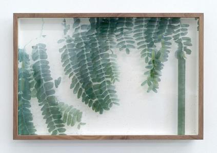 Botanical Frottage - Irma (Oaxaca series)