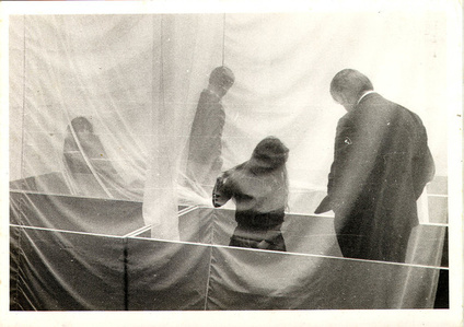 Eden (installation view, Whitechapel Gallery, London, 1969)