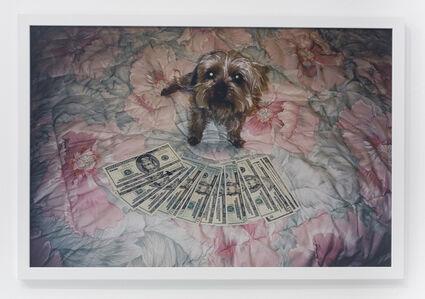 Little dog on floral comforter