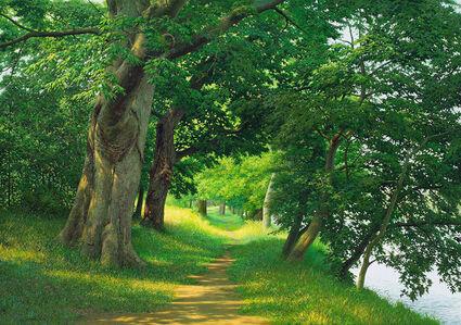 No 93 Silent Woods