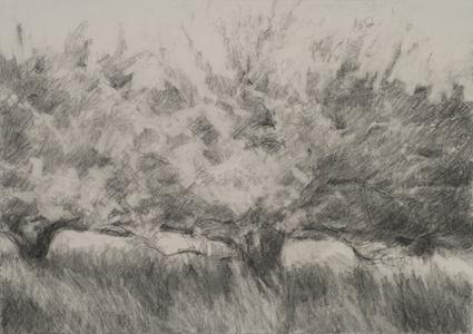 Orchard #8